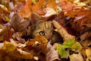 Acechando-en-otoño