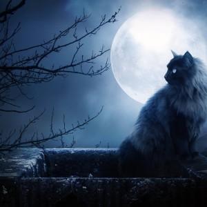 gato-y-luna-llena1